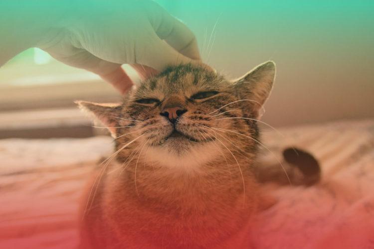 zdrowie psychiczne kota